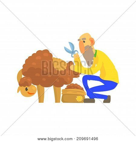 Old bearded farmer sheaving wool from sheep. Domestic animal. Cartoon characters. Concept for farming, animal husbandry, wool production. Vector illustration in flat style isolated on white background