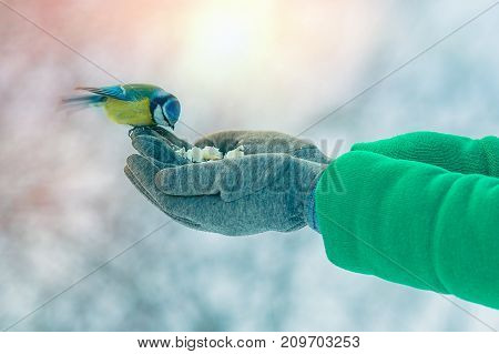 Beautifull Girl Pour Seeds In Bird Feeder In Winter Snowy Garden. Bluetit Perched On A Girls Hand In