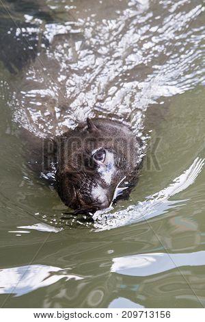 sea lion seal underwater animal california ocean nature water blue wildlife lions mamal marine sealion love under life