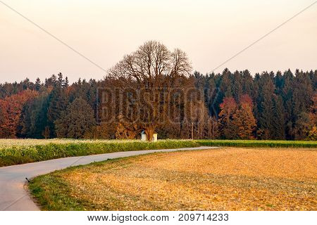 Scenic view of chapel behind a tree with the forest in the background
