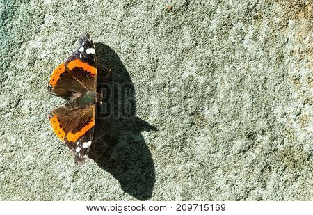 The red Admiral - Vanessa atalanta butterfly with shadow on the grunge old wall close up