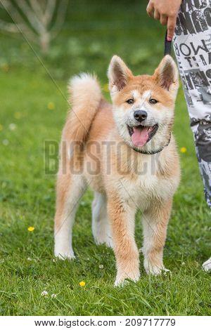 dog small white black out park na portrait domestic mammal pet