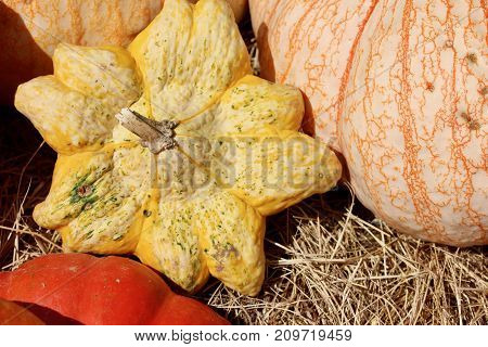 Star shaped yellow pumpkin fall background, Thanksgiving Halloween