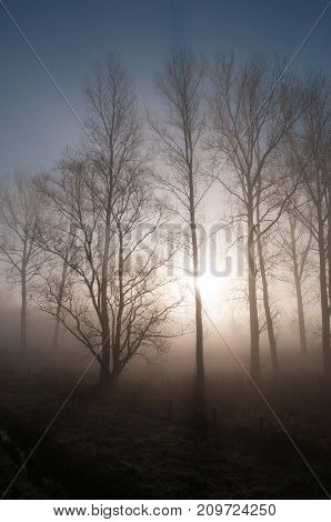A thin fog is covering this rural landscape in the Southern part of the Belgian province of East-Flanders.