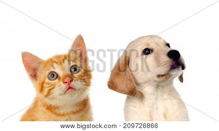 Two beautiful puppies, a cat and a dog, looking up isolated on a white background