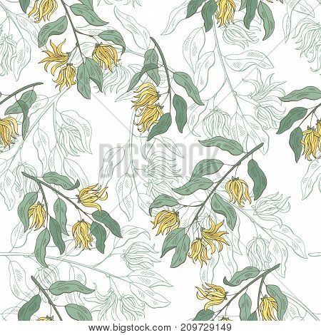 Cananga ylang-ylang graphic color seamless pattern sketch illustration vector