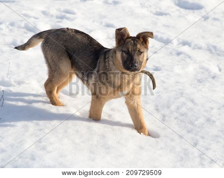 Dog in the snow . In the park in nature