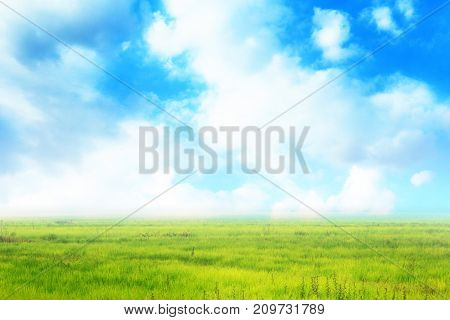Landscape of beautiful grass field bright cloud and blue sky in background. Classic grass and sky background with copy space for text.