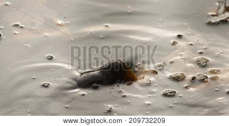 A fish breathes for air in the river
