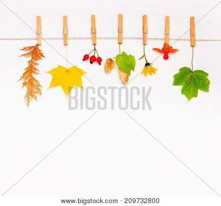 Autumn flower maple leaves berries rose hips hop cones and physalis on white background. Flat lay top view copy space. mock up for text congratulations phrases lettering