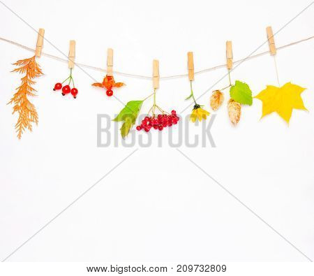 Autumn composition made of flower maple leaves berries rose hips red viburnum hop cones and physalis on white background. mock up for text congratulations phrases lettering