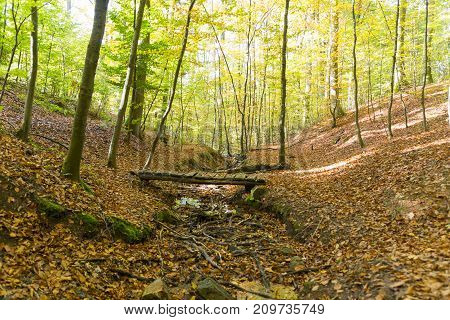 forest landscape with small wooden bridge over dried out stream climate change drought sunny autumn day hiking trip
