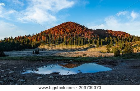 mountain with autumn forest reflecting in a puddle. lovely morning landscape