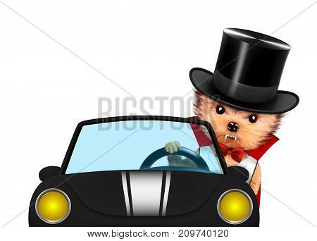 Funny cartoon animal Dracula sit in black car. Halloween and Dead day concept. Realistic 3D illustration.