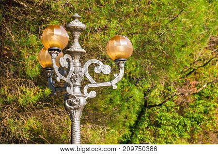 The beautiful decorative streetlight on the background of branches of different trees in Sochi Arboretum Russia
