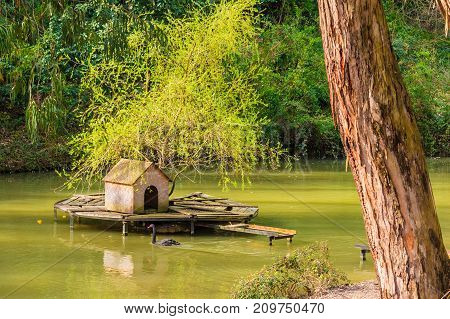 A lake with house for swans and swimming black swan located in Sochi Arboretum Russia