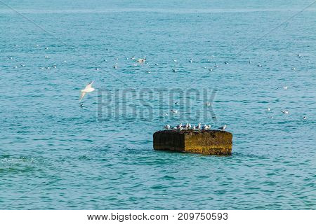 Part of breakwater in the sea and seagulls sitting on it and swimming around it Sochi Russia