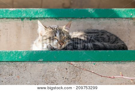 Cat sleeping on the stairs . In the park in nature