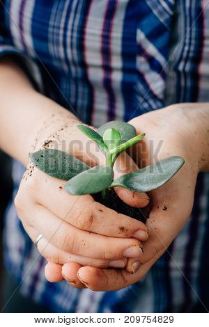 Plant in hands - the concept of new life and safety
