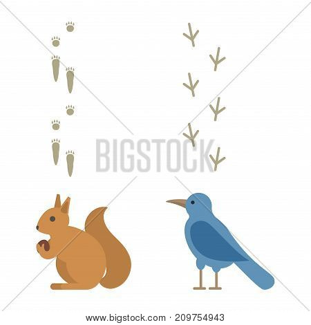 Animal footprints include mammals and birds. Foot print trace wildlife track steps. Wild nature silhouette vector walk pattern cartoon sign.