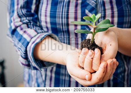 Hands holding small sprout of green succulent plant