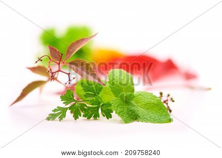 Parsley, Mint, Girlish Grapes, Fresh Greens Isolated On White With Blurred Background