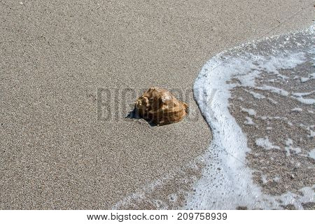 Shell on the beach, summer and vacation, resorts
