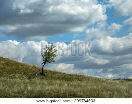 Landscape. Tree in the field under the cloudy sky.