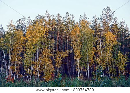beautiful colored trees and bushes in the autumn forest