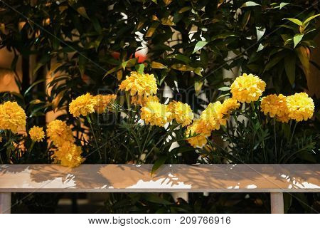 Marigold flowers plastic fence for Decorate in the Bangkok City, This is During the mourning to King Rama 9 of Thailand.