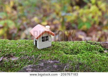 doll house on a tree covered with green moss, close up
