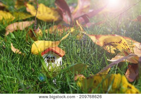 a doll house on a green grass under an autumn yellow leaf, with a ray of sun