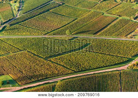 Aerial view of vineyard grape fields in France at sunrise