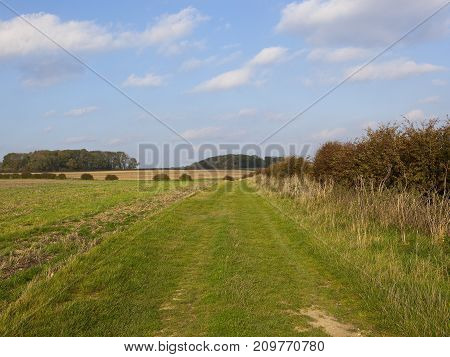 Grassy Track And Hedgerow