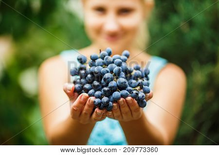 young girl gives a big bunch of dark blue juicy fresh grapes in the garden. girl holding grape in hands on blured natural green background