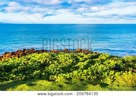 Overlooking the Pacific Ocean from a beach in Maui Hawaii