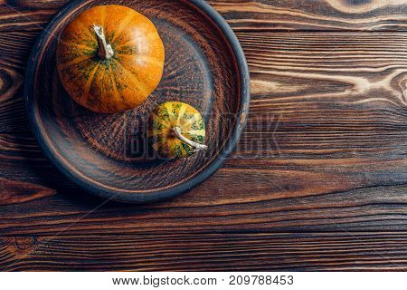 small pumpkins are rooted on a wooden brown background