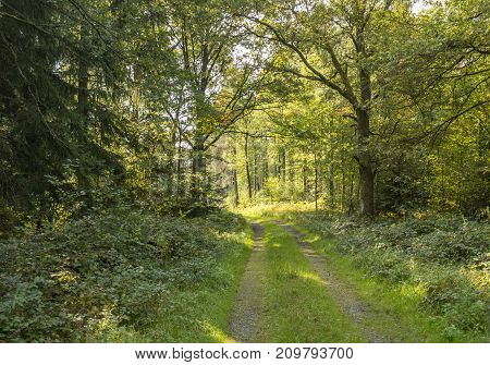 sunny illuminated idyllic forest scenery with forest track at late summer time
