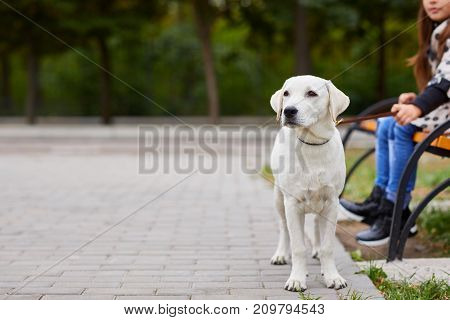 Cute a white dog walking outdoors in the park. Doggie standing on the nature background. Close-up of dog. Copy space. Pet concept.