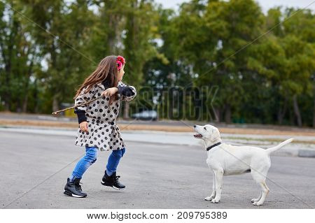 Funny doggie playing with owner on the street. Pet with girl walking outdoors on a natural background. Full length of girl. Animal concept.