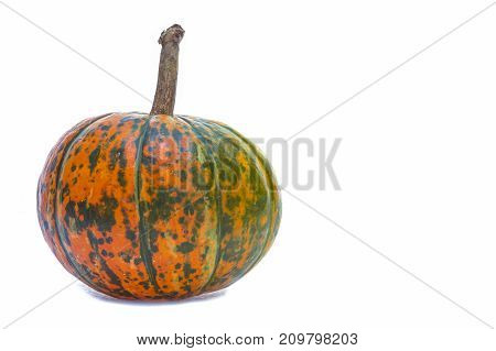 Food Concepts. Closeup of Natural Yellowish Pumpkin with Long Stem Over Pure white Background. Horizontal Image