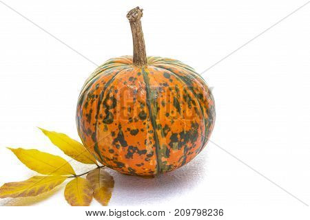 Food Concepts. Closeup of Natural Yellowish Pumpkin with Long Stem Over Pure white Background. Laid with Leaves. Horizontal Image