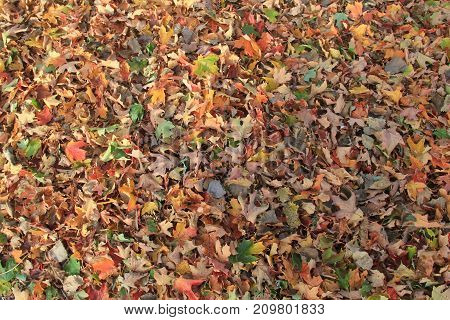 Autumn leaves on the ground during fall