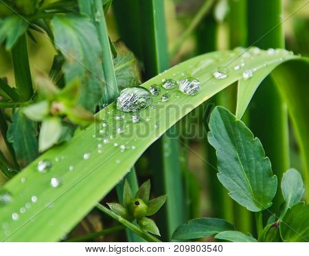 Grass with drops after a rain close up