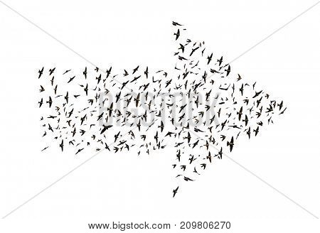 Birds flying in arrow formation isolated on a white background.