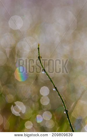 Background With Drops Of Dew Grass With Beautiful Bokeh Effect