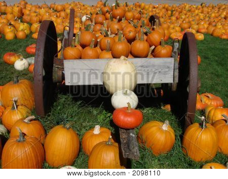 Pumpkin At The Farmstand