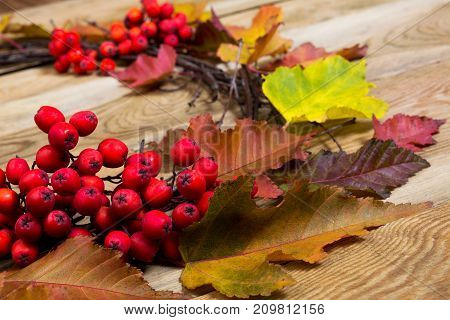 Thanksgiving Wreath With Leaves And Rowan Berries, Close Up