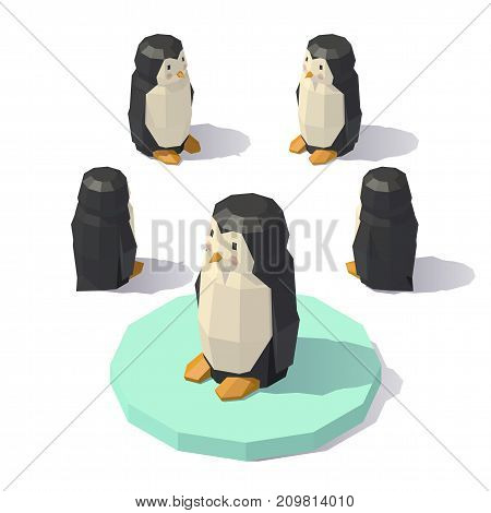 Vector isometric low poly penguin. Penguin from different angles.