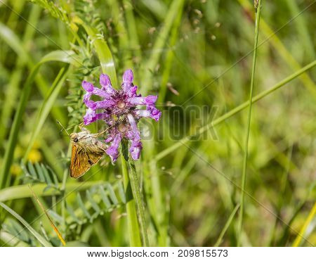 violet flower and butterfly in sunny ambiance